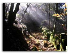 Hill walking track at the Ribeira Sacra, Galicia, Spain